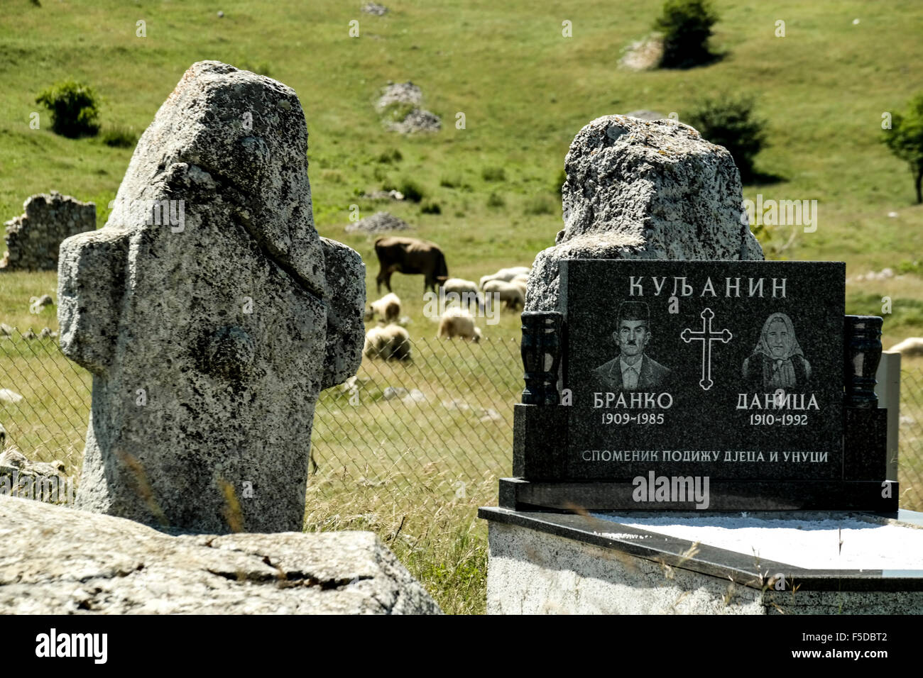 Stećci (medieval gravestones), modern graves, cattle and destroyed houses in mountain village Blace (Konjic). - Stock Image