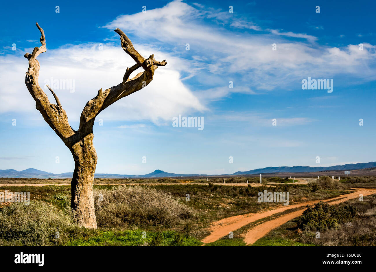 the australian outback - Stock Image