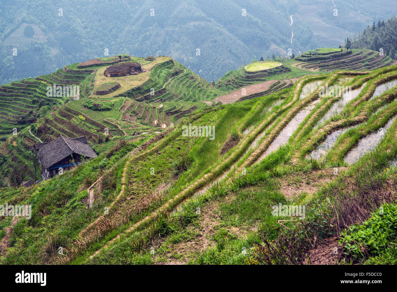 Layered rice terraces of Longii Titian (Dragon's Backbone Terraces), Guangxi, China - Stock Image