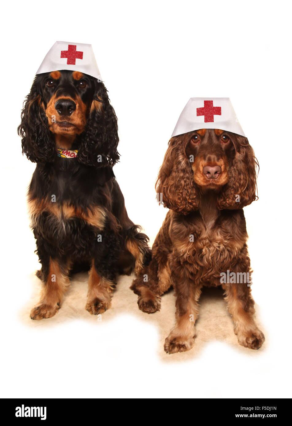 pet care vets studio cutout - Stock Image