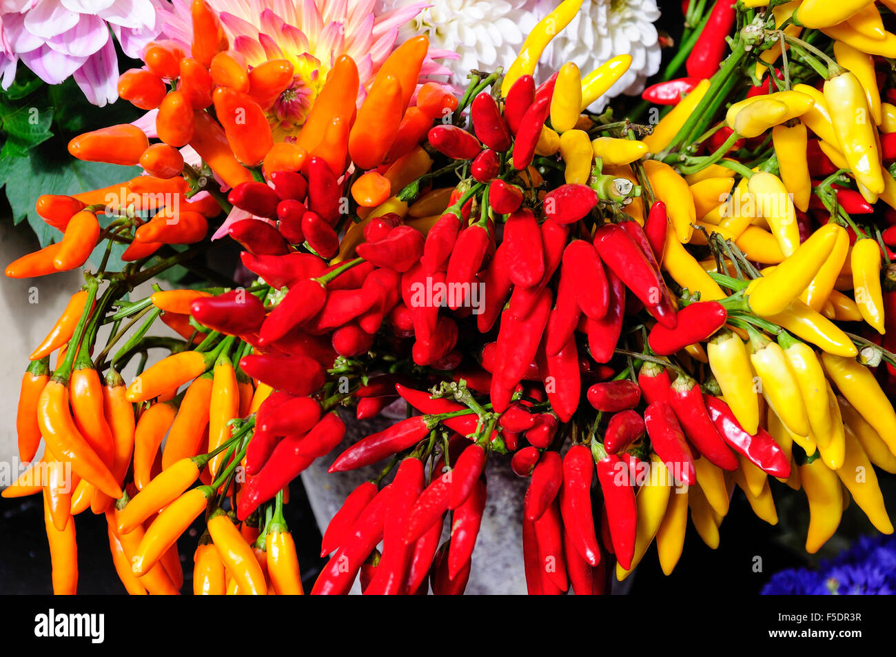 Colourful peppers in flower shop, Flask Flask Walk, Hampstead, London Borough of Camden, Greater London, England, - Stock Image