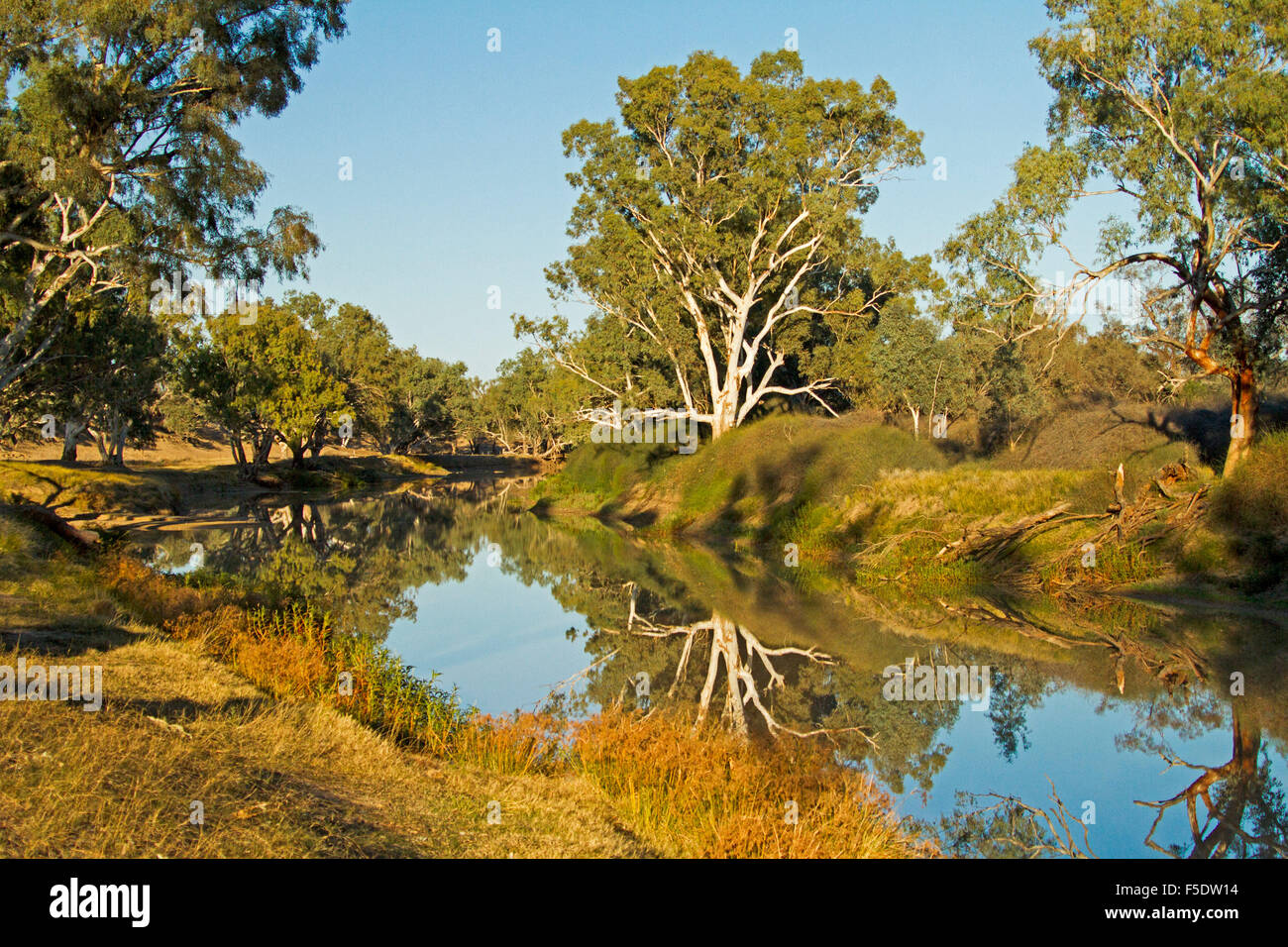 Picturesque landscape at Cooper Creek with tall gum trees & blue sky reflected in calm water of outback waterway - Stock Image