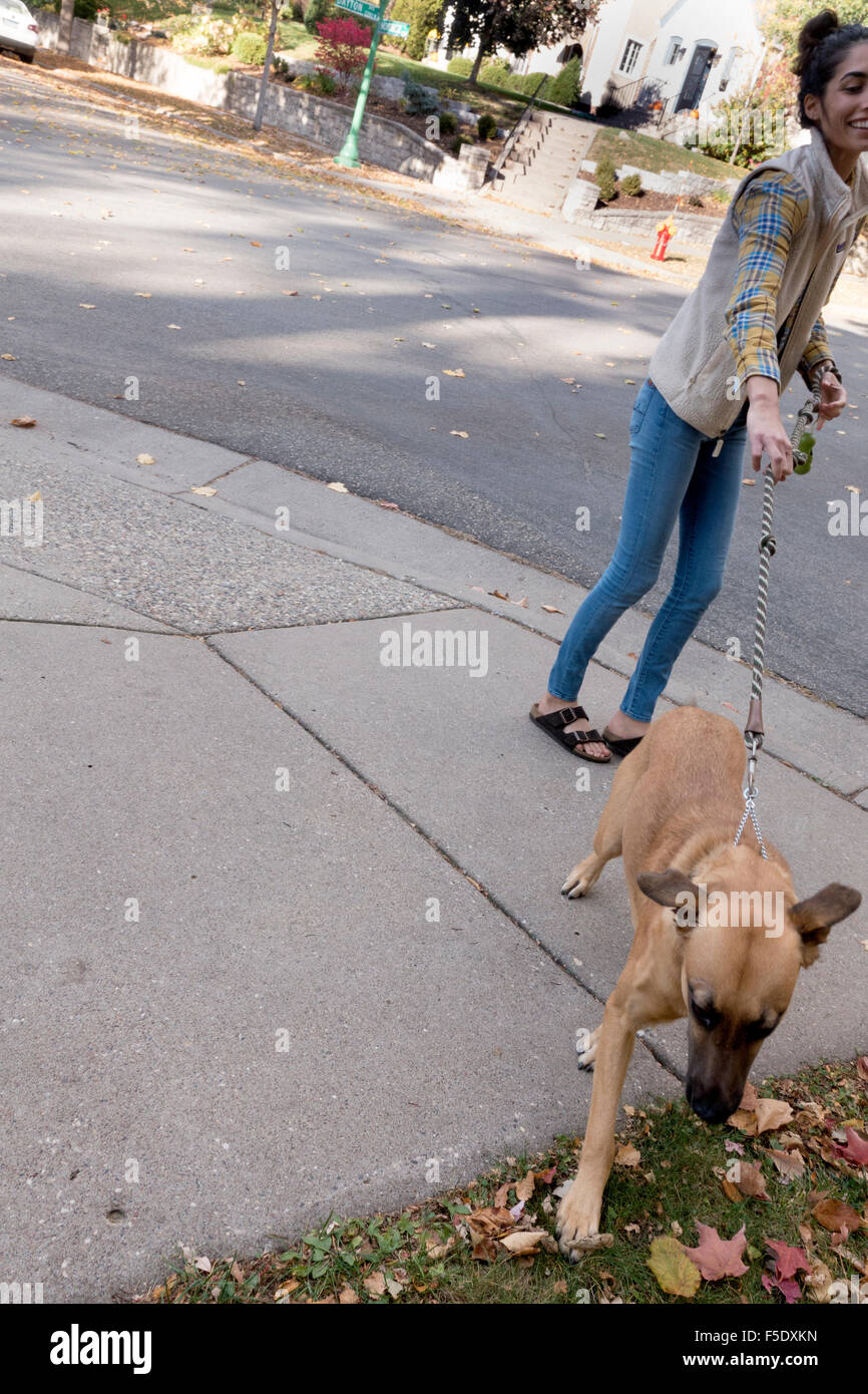 Mexican American woman sharing the sidewalk with her friendly pet dog on a leash. St Paul Minnesota MN USA - Stock Image