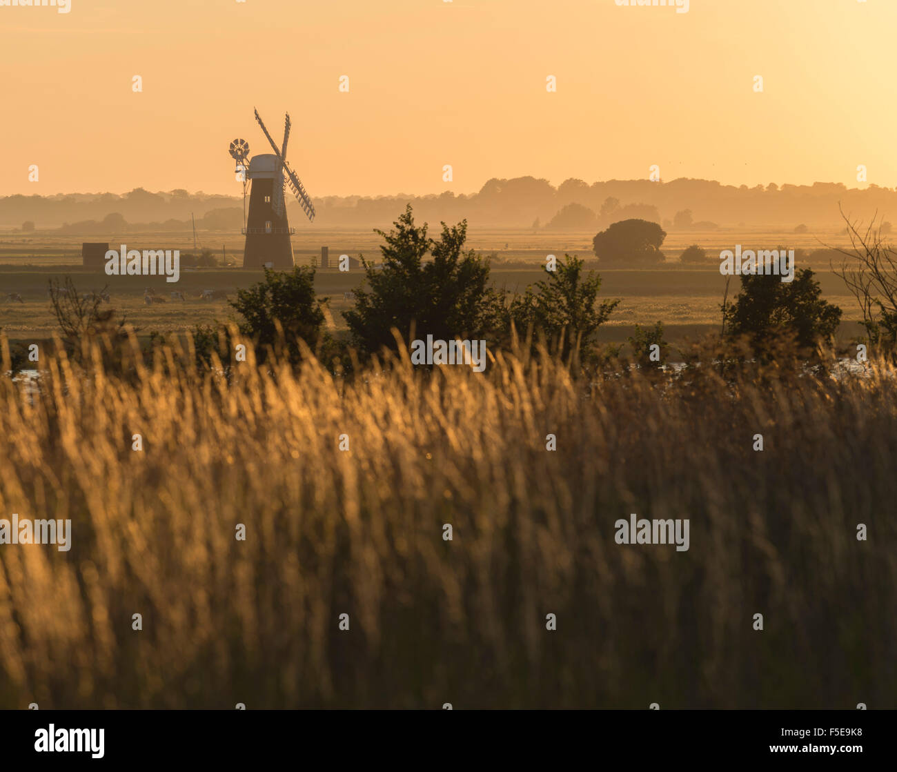 A view across marshland towards Berney Arms Mill, Norfolk, England, United Kingdom, Europe - Stock Image