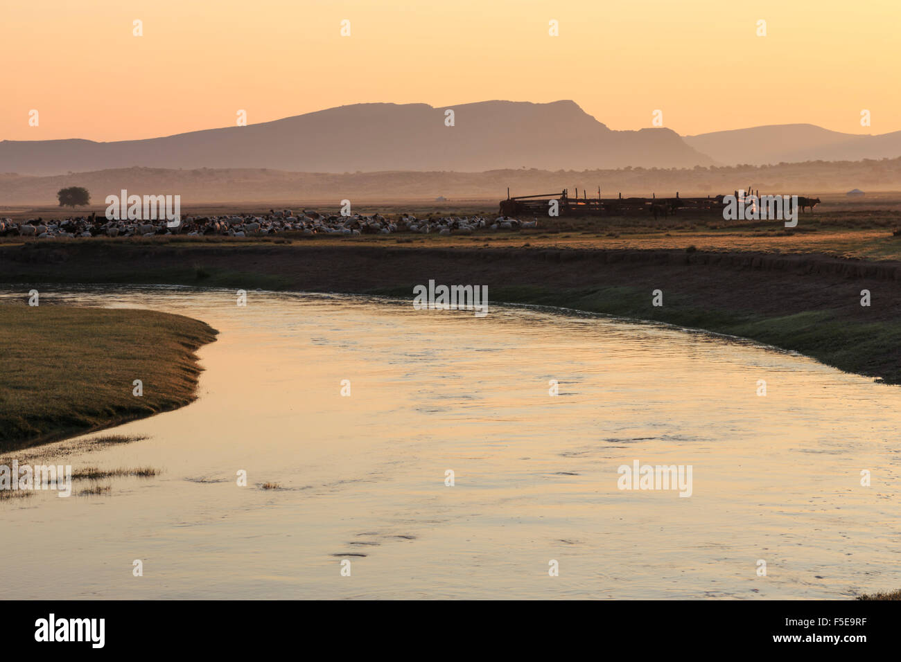 River, gers and herd of goats, sheep and cows with stock pen, misty dawn in summer, Nomad camp, Gurvanbulag, Bulgan, - Stock Image