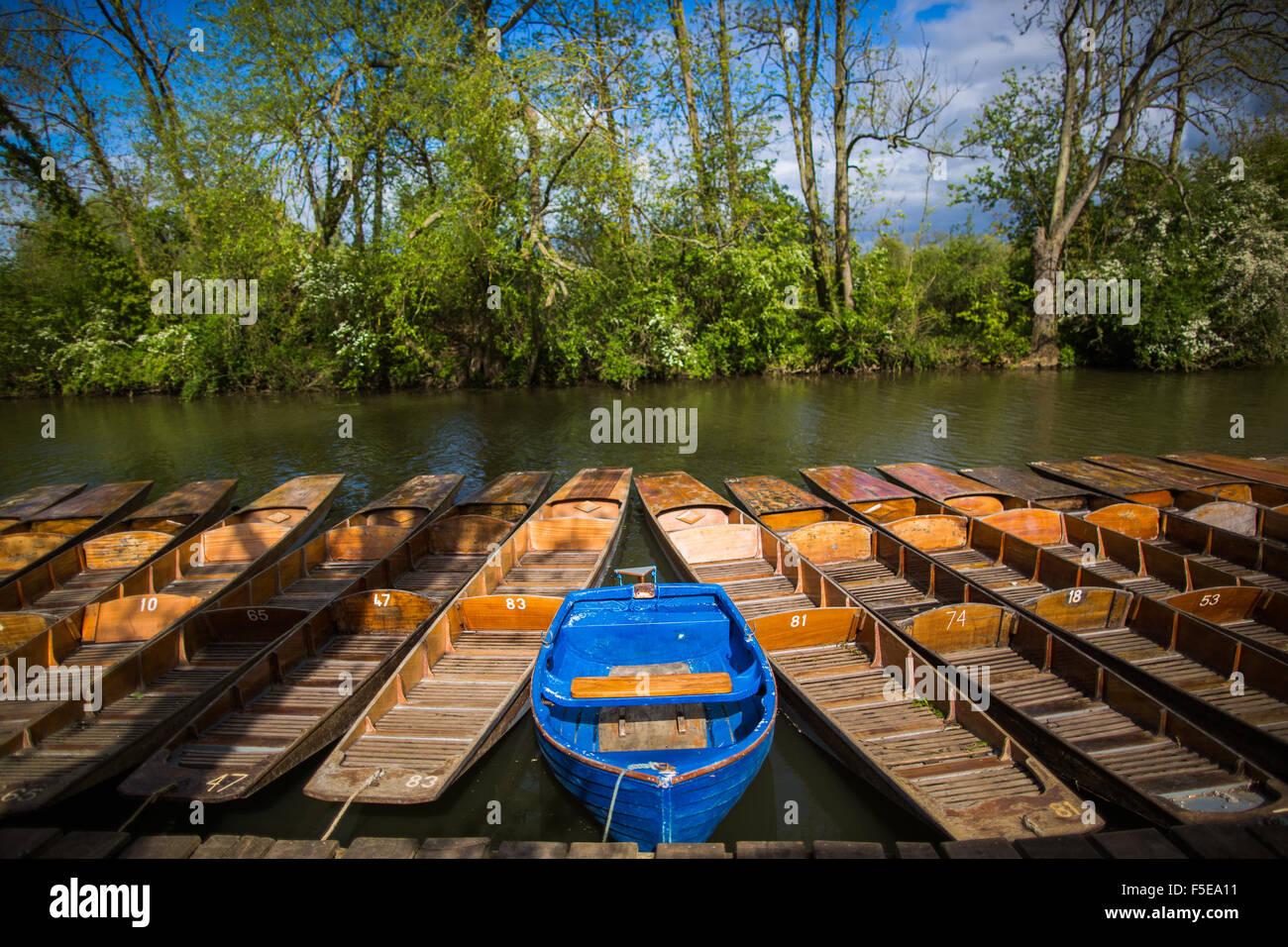Punting, Cherwell Boathouse, Oxford, Oxfordshire, England, United Kingdom, Europe - Stock Image
