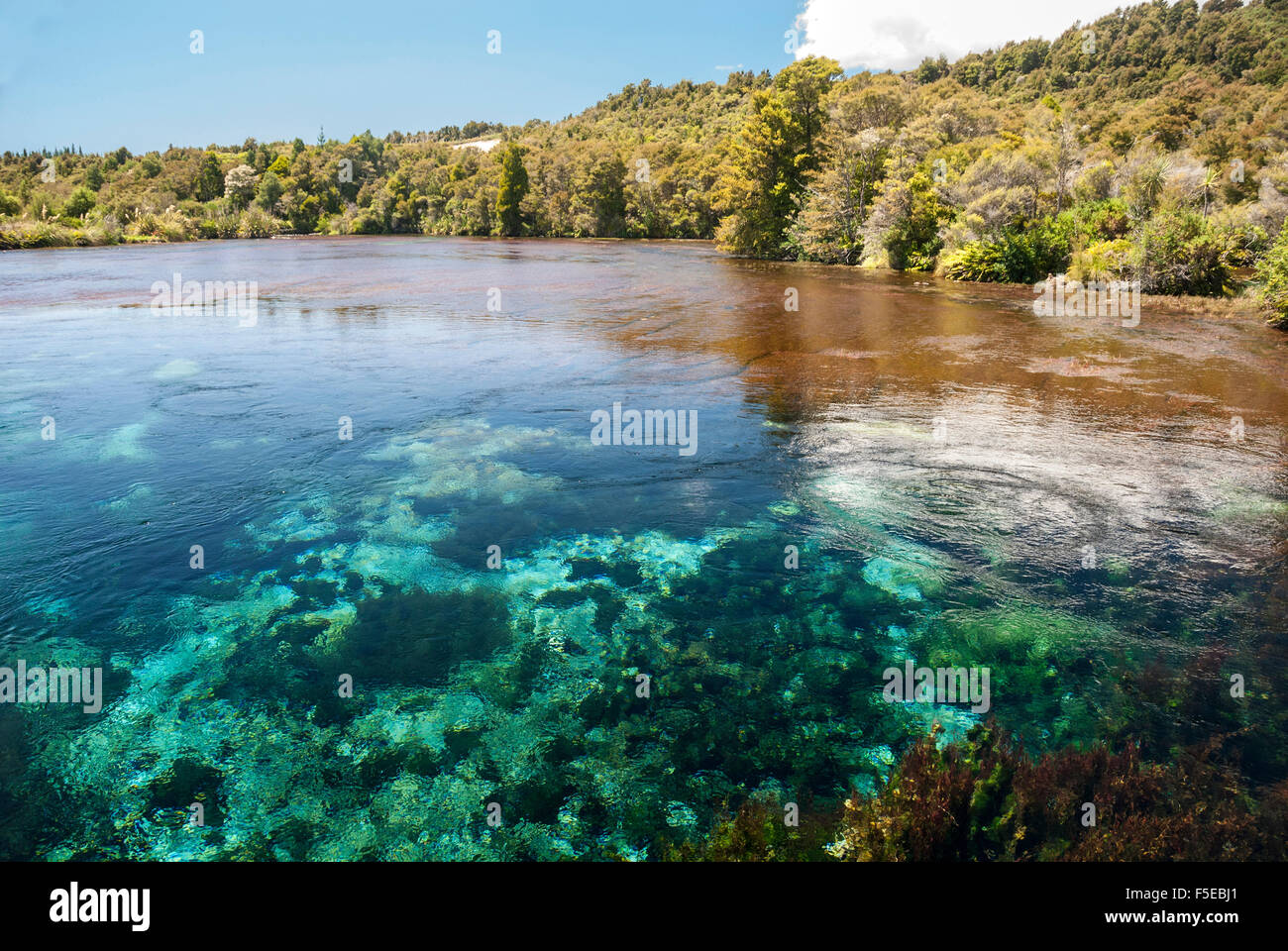 Te Waikoropupu Springs, Takaka karst, South Island, New Zealand, Pacific - Stock Image
