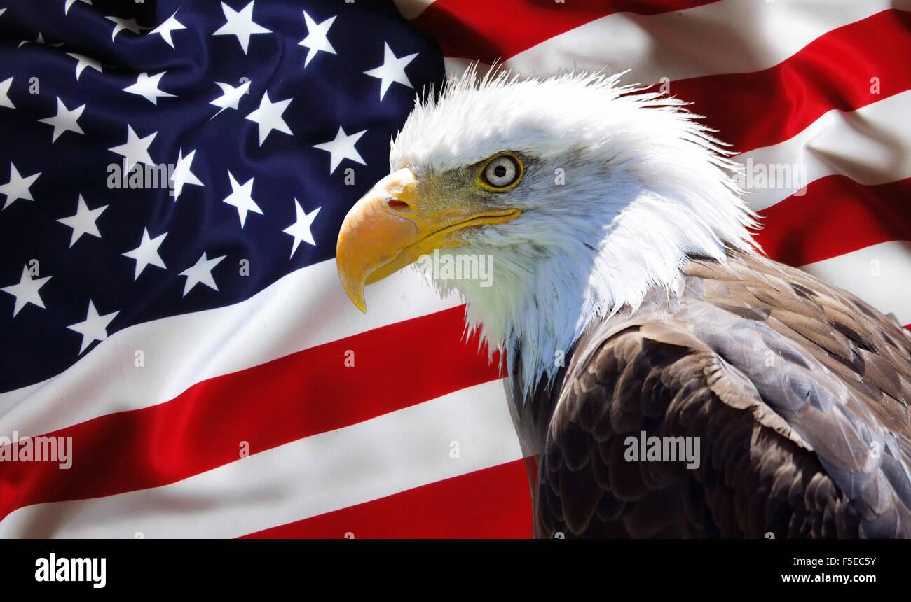Patriotic Wallpaper Usa Flag Eagle: North American Bald Eagle On