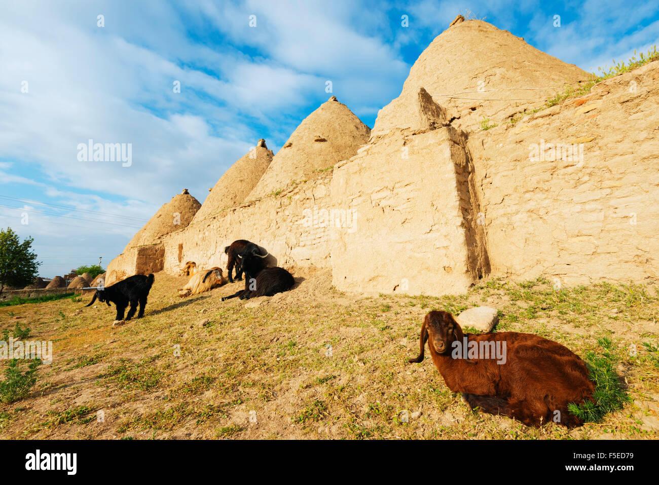Bee-hive mud brick houses and goats, village of Harran, Anatolia, Turkey, Asia Minor, Eurasia - Stock Image