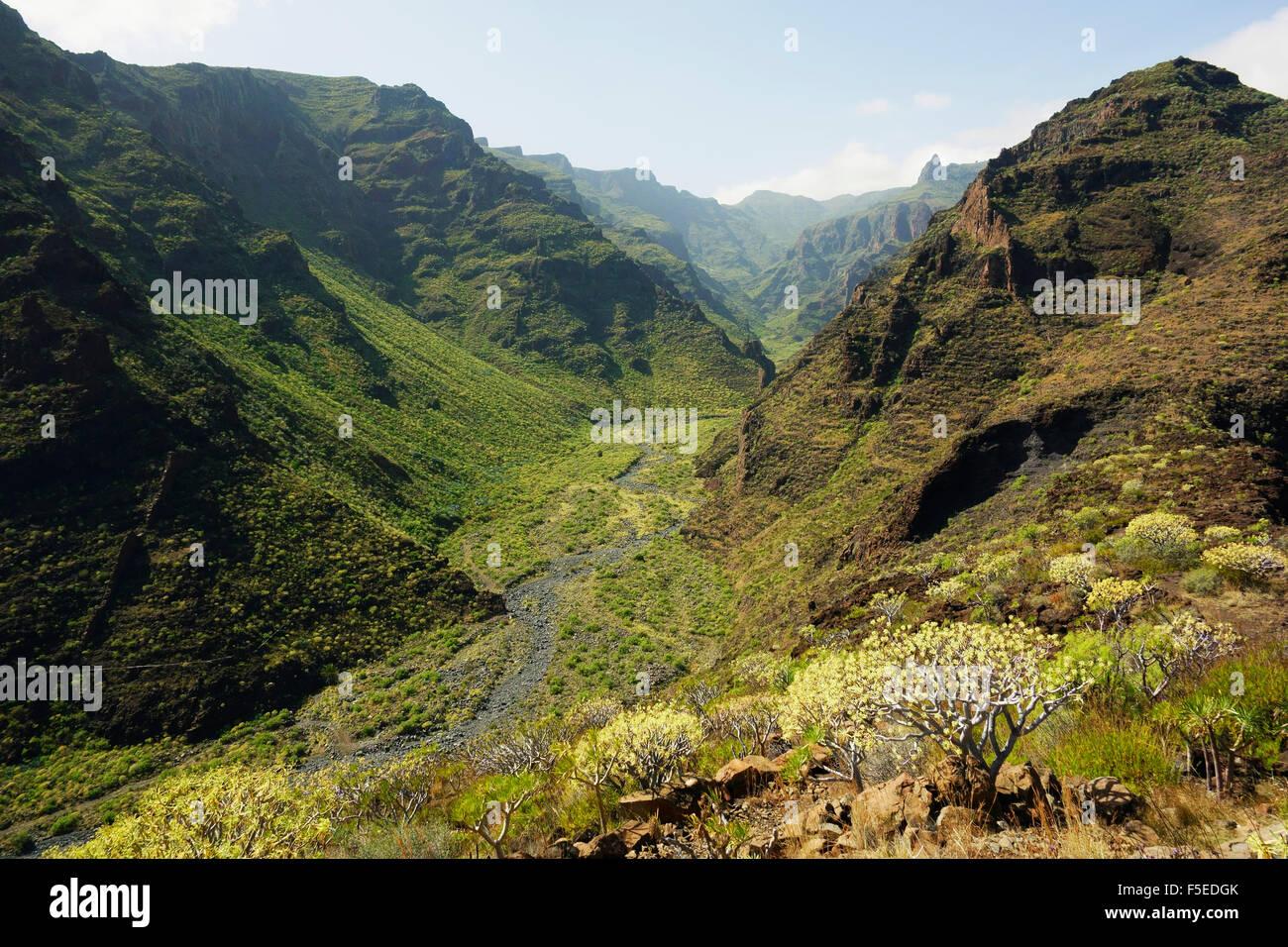 Barranco de Santiago, La Gomera, Canary Islands, Spain, Europe - Stock Image