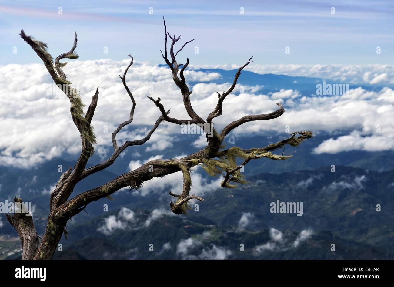 Dead tree and cloudscape, Kota Kinabalu, Malaysia - Stock Image
