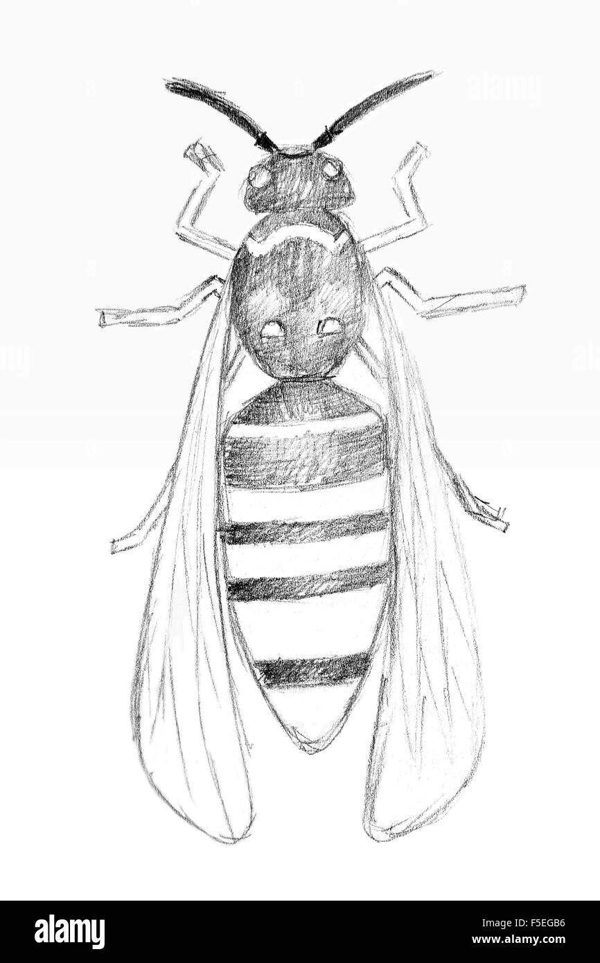 Pencil drawing by the wasp on the white paper original pencil or