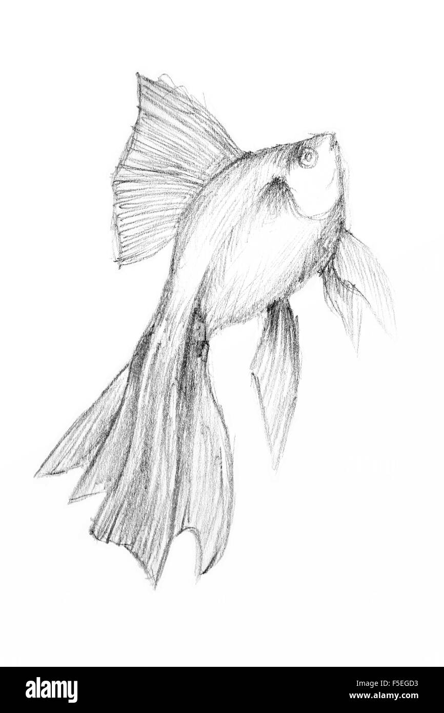 Pencil drawing by the fish on the white paper original pencil or