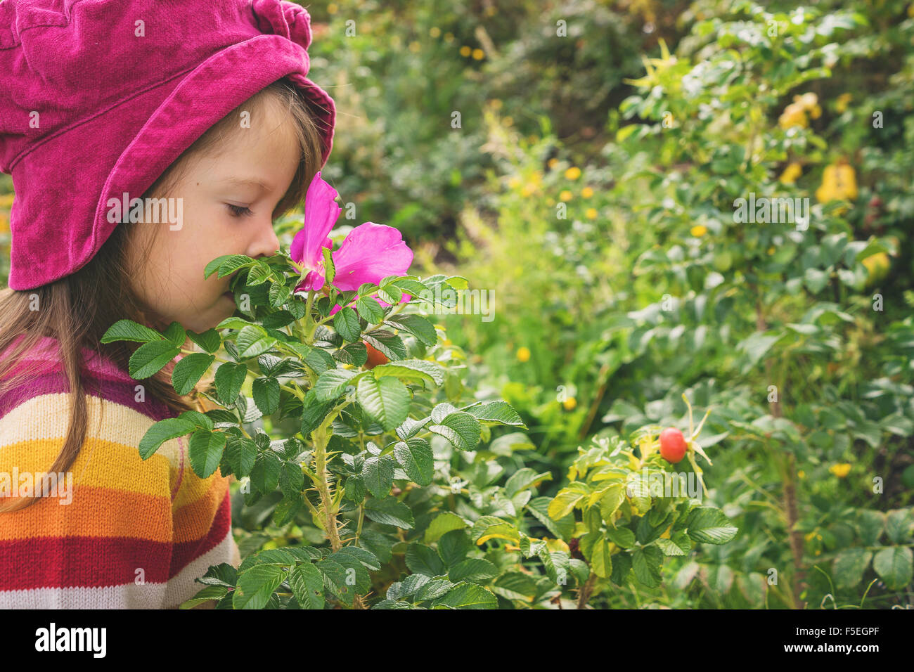 Girl smelling rosehip flower - Stock Image