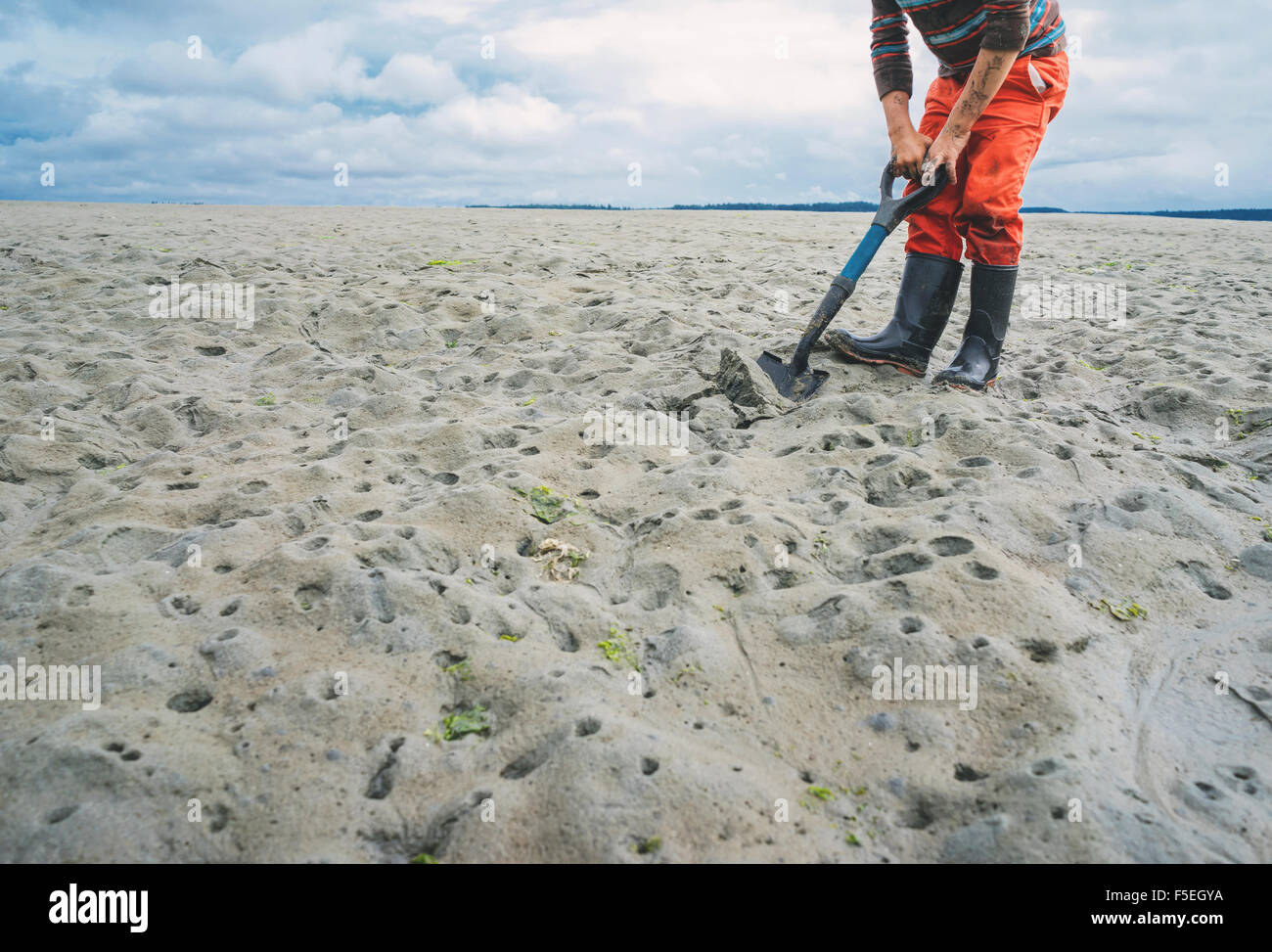 Boy digging for clams on sandy beach - Stock Image