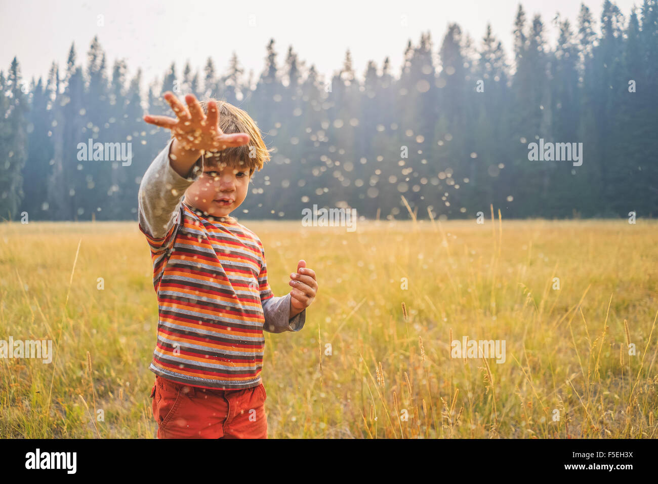 Boy throwing seeds in a field - Stock Image
