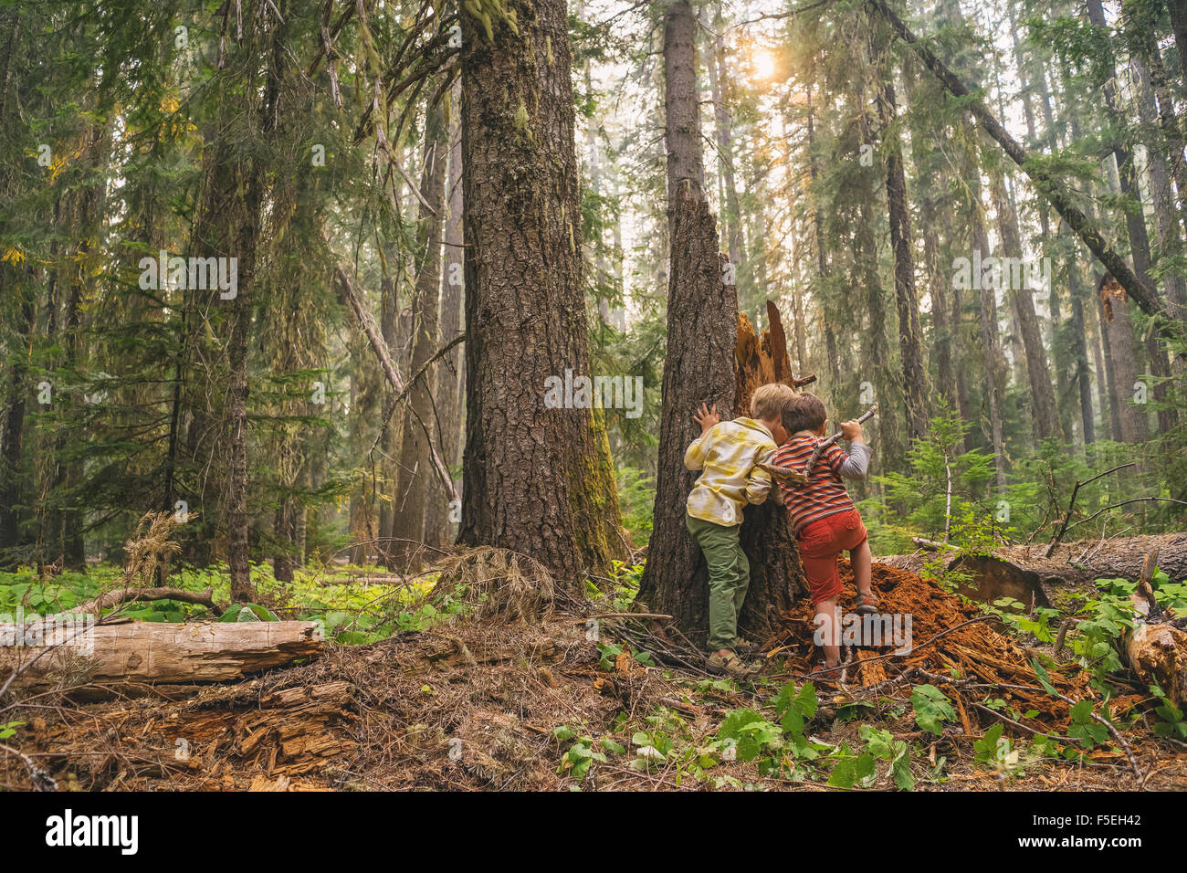 Two boys playing in the forest Stock Photo