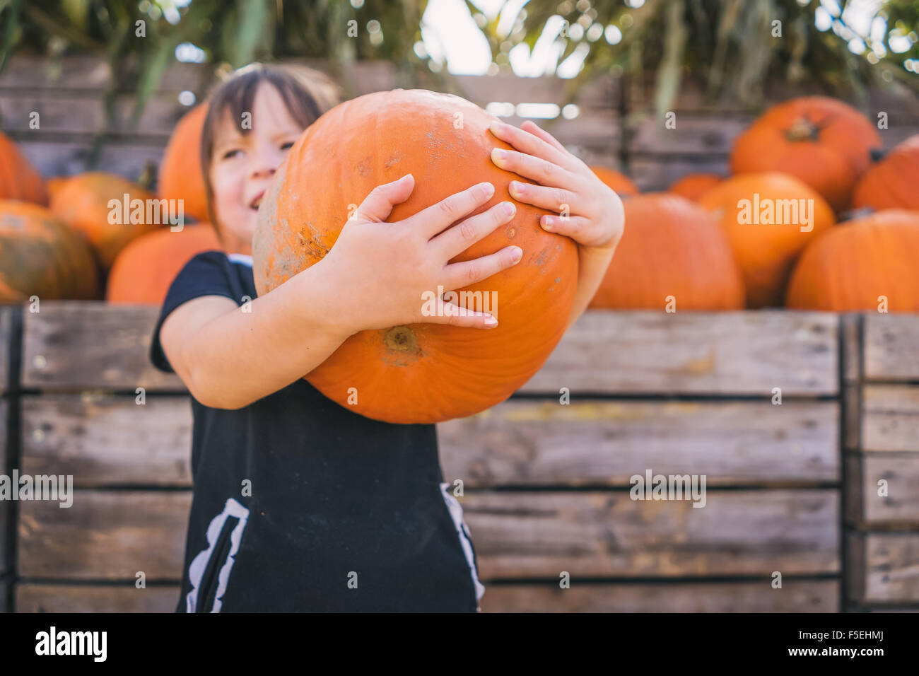 Girl holding large pumpkin at pumpkin farm - Stock Image