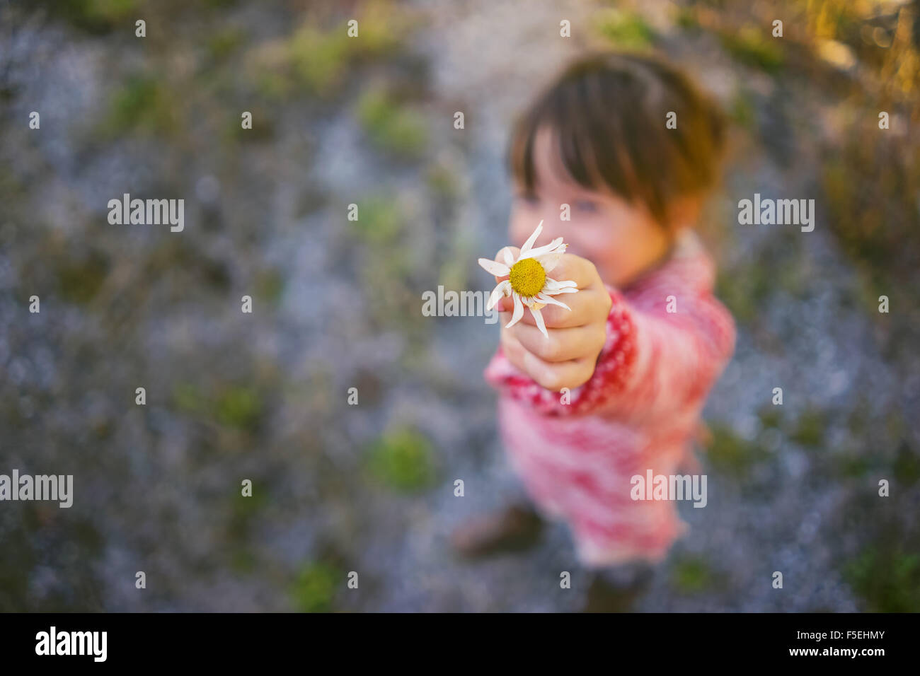 Girl offering a daisy - Stock Image