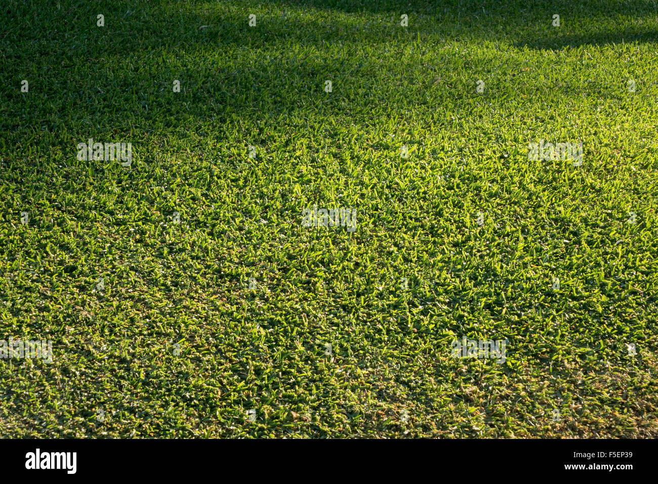 Green grass of a lawn freshly mown - Stock Image