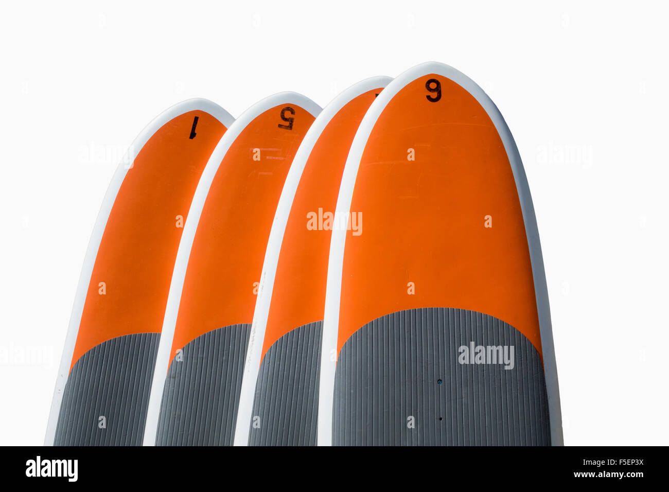 Row of four paddle boards or body or surf boards on white background - Stock Image