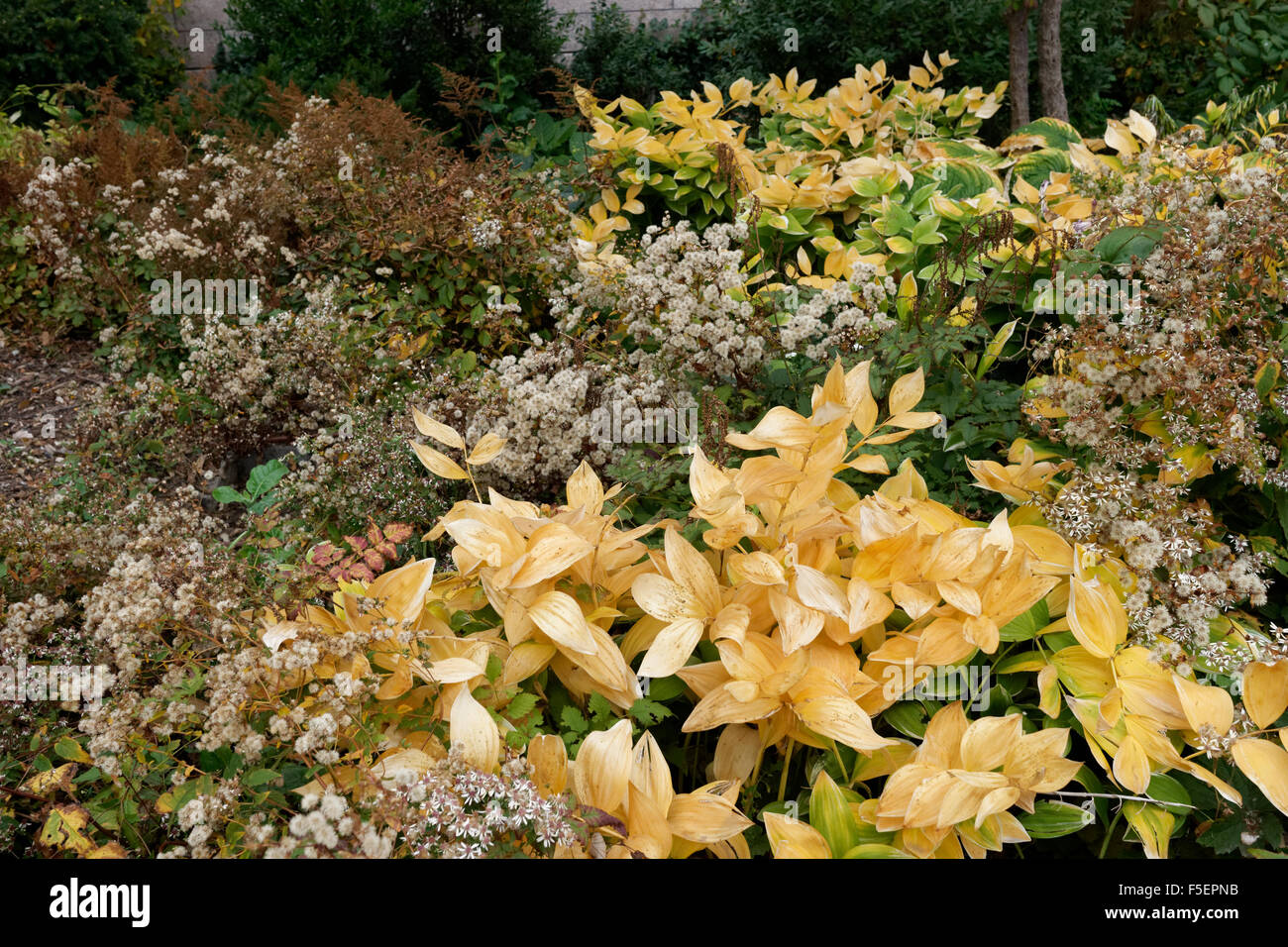 An autumn garden in Battery Park City, a neighborhood in Manhattan ...