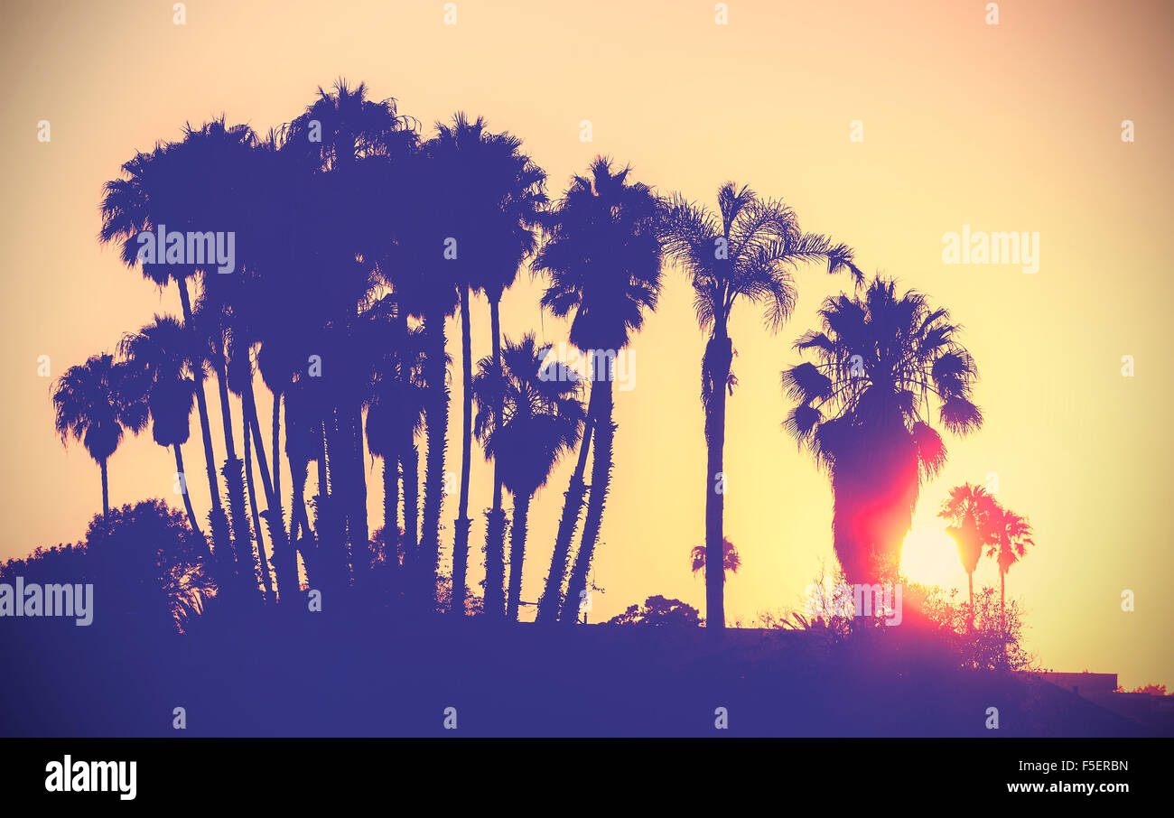 Vintage stylized picture of palms silhouettes at sunset, California, USA. Stock Photo