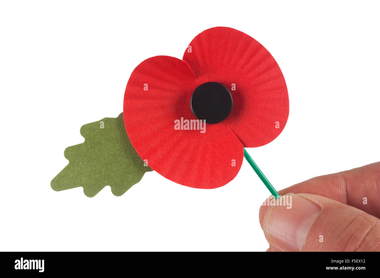 Male hand holding poppy - Stock Image