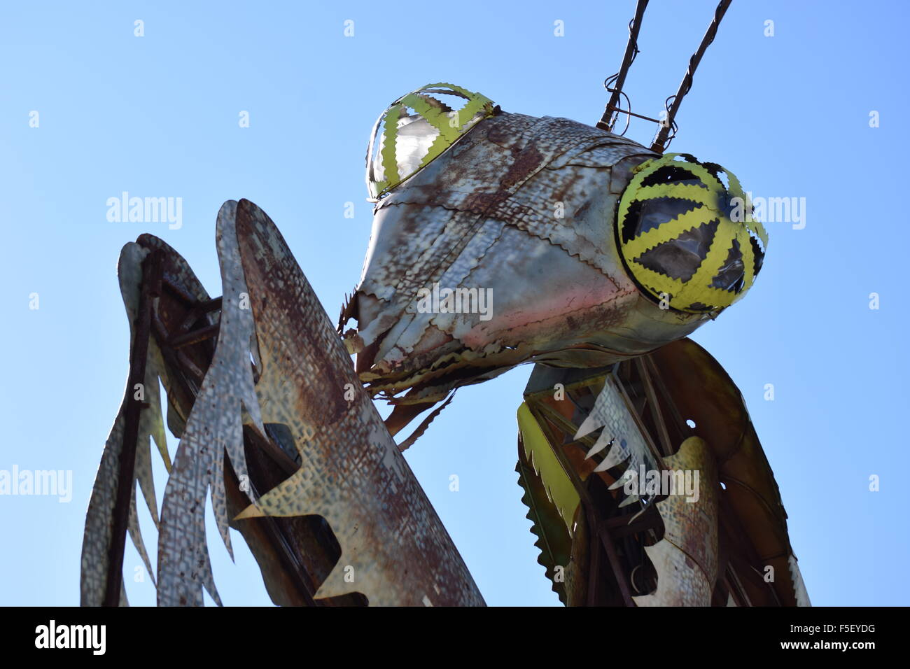 Preying Mantis Mascot. - Stock Image