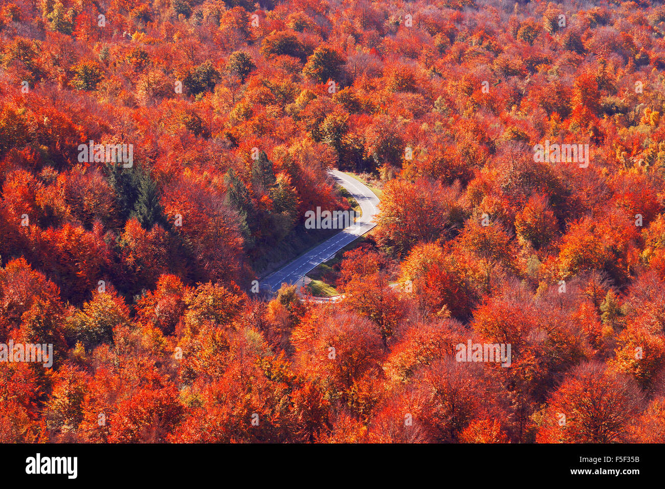 road in autumn surrounding by trees in Opakua - Stock Image