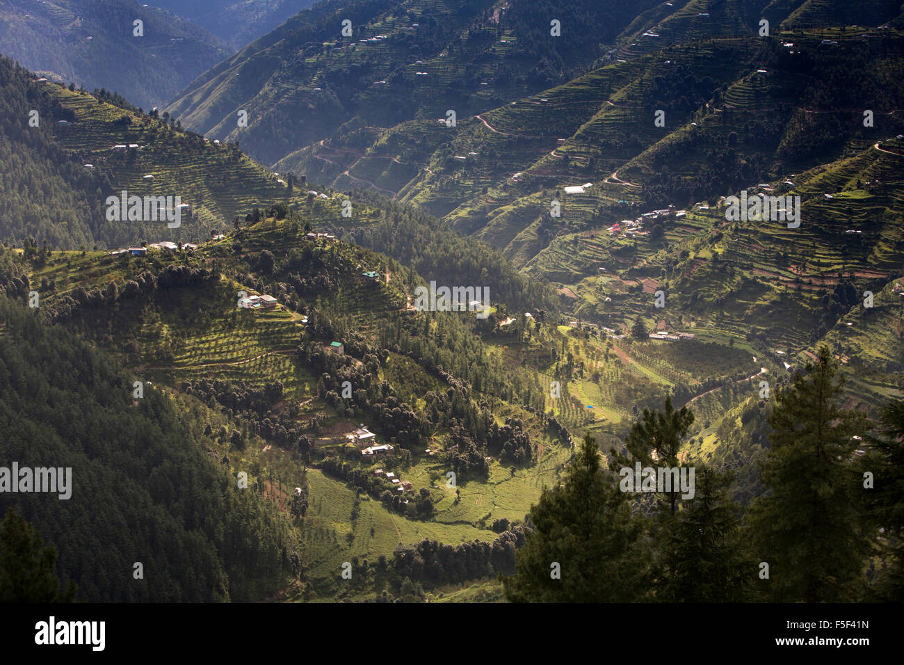 India, Himachal Pradesh, Shimla (Simla), terraced apple orchards on steep hillsides - Stock Image