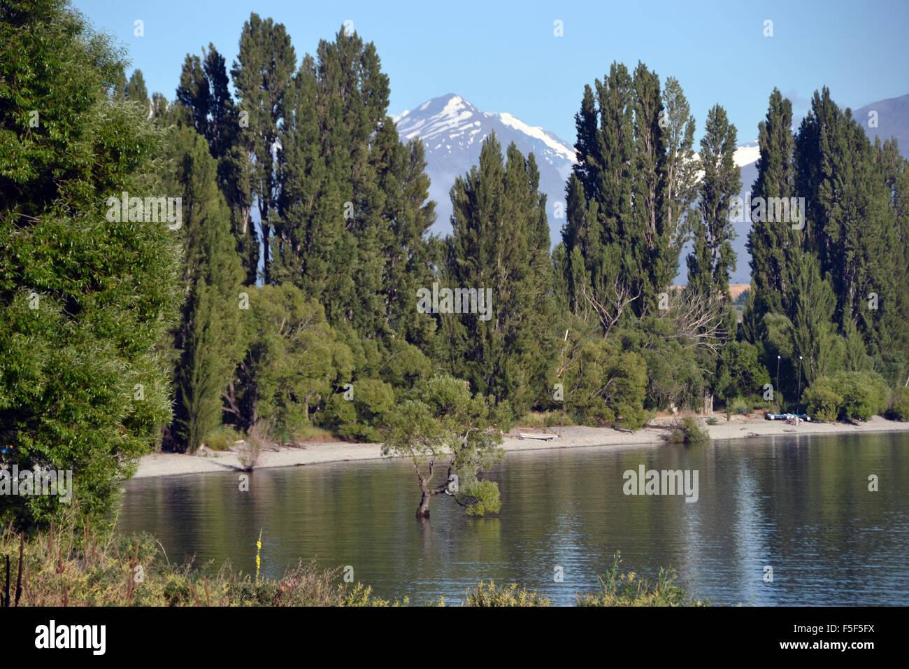 Lake Wanaka shore and 'That Wanaka Tree', a willow tree that is the landmark of Wanaka, South Island, New - Stock Image