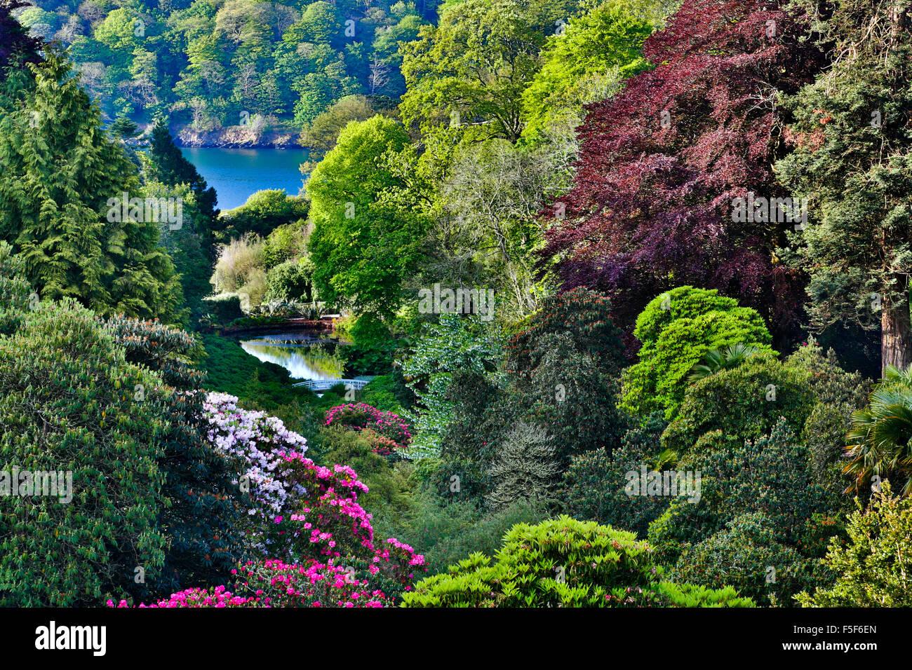 Trebah Garden Spring Cornwall Uk Stock Photo 89459517 Alamy