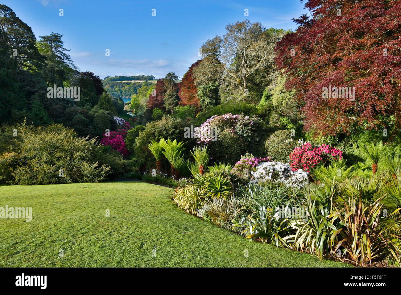 Trebah Garden; Spring; Cornwall; UK - Stock Image