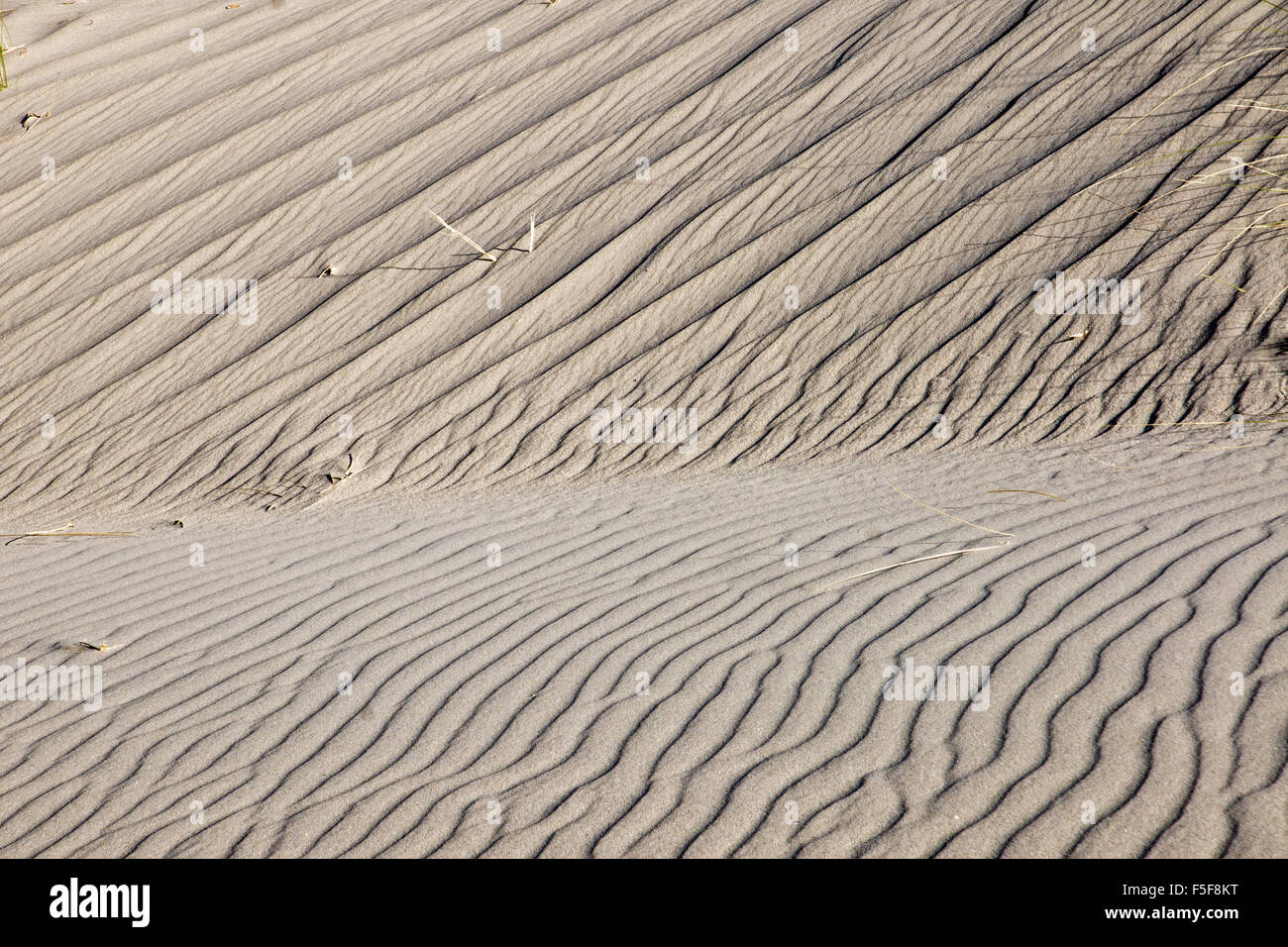 A rippled sand dune with some marram grass - Stock Image