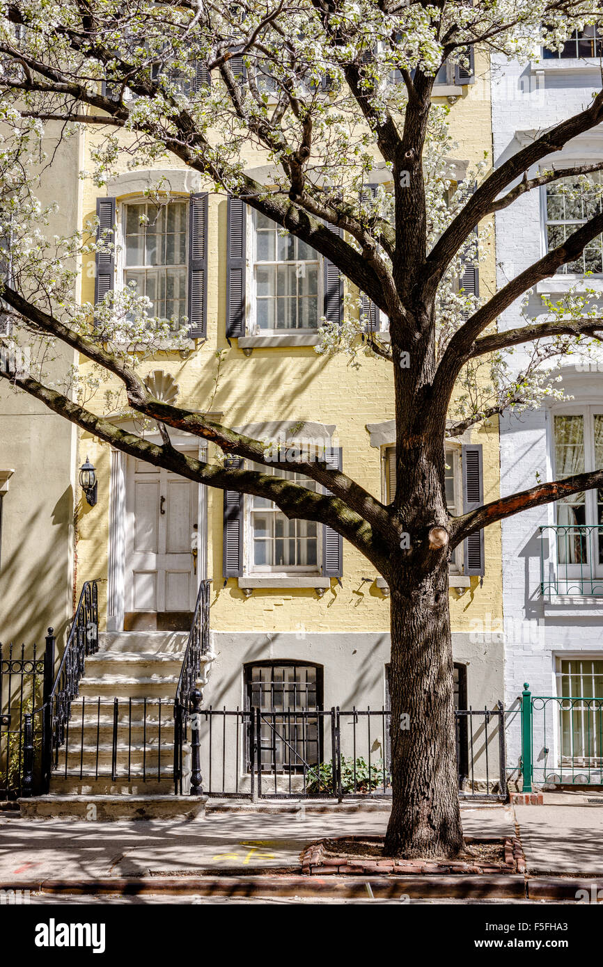Chelsea Townhouse Spring morning with blooming tree, Manhattan, New York City - Stock Image