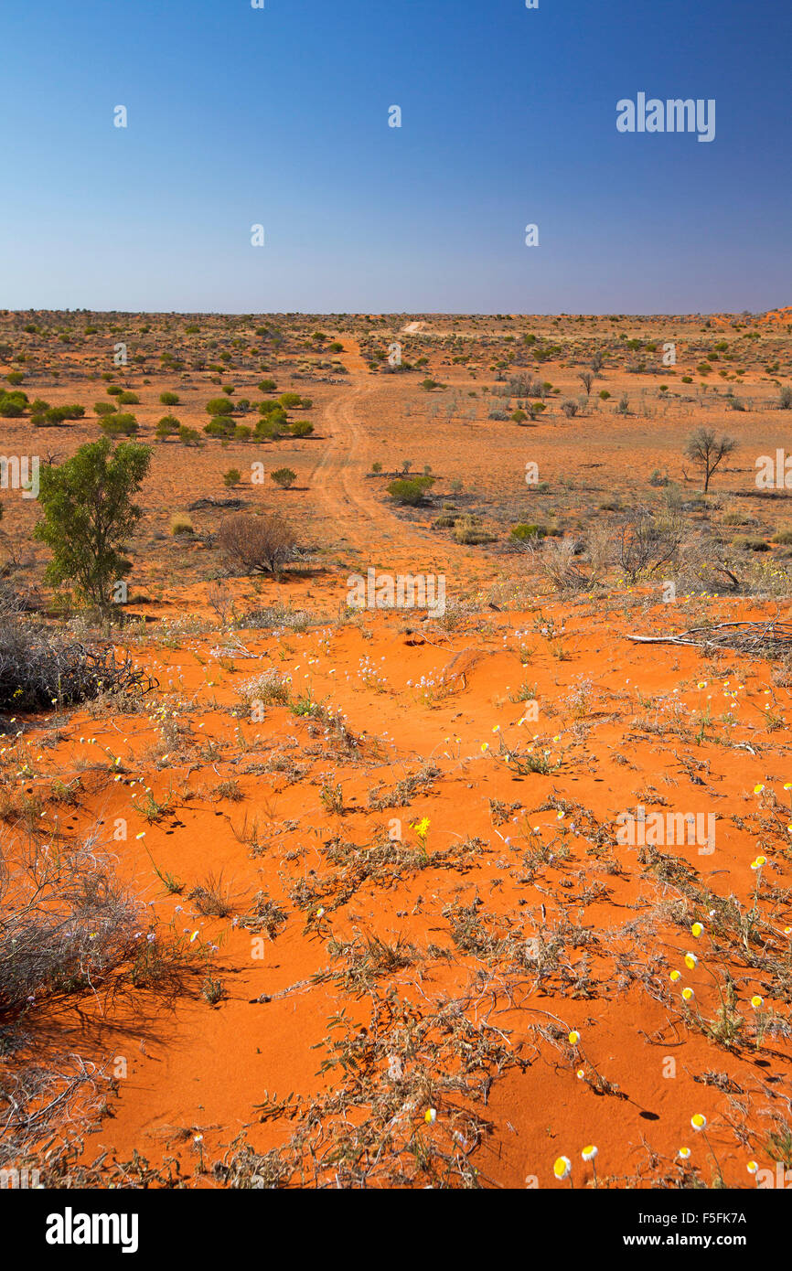Vast arid desert landscape with track across vast red barren outback plains stretching from sand dunes to distant Stock Photo