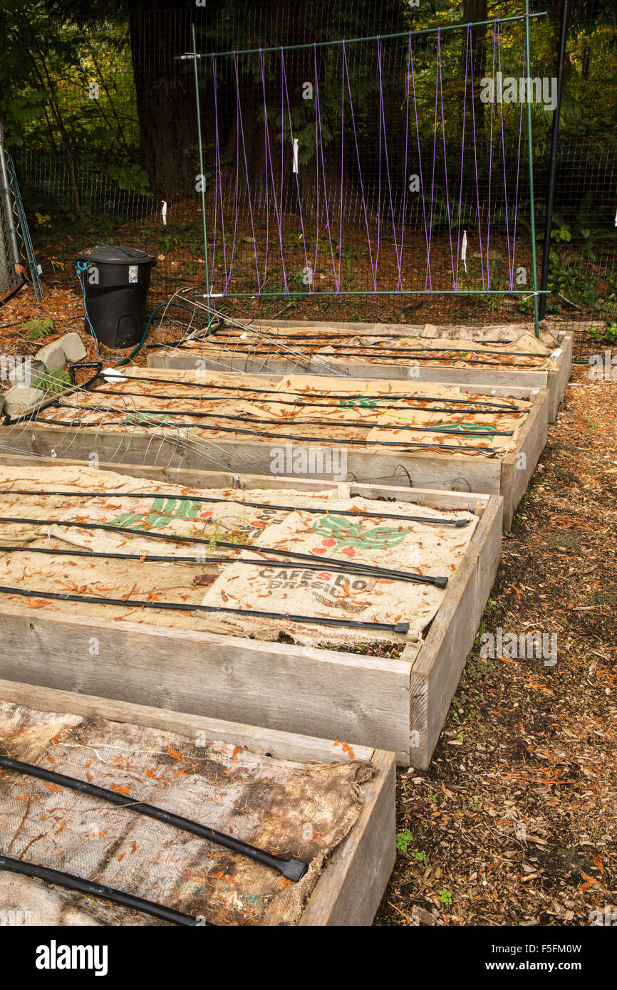 Raised garden beds prepared for the winter by putting burlap bags ...