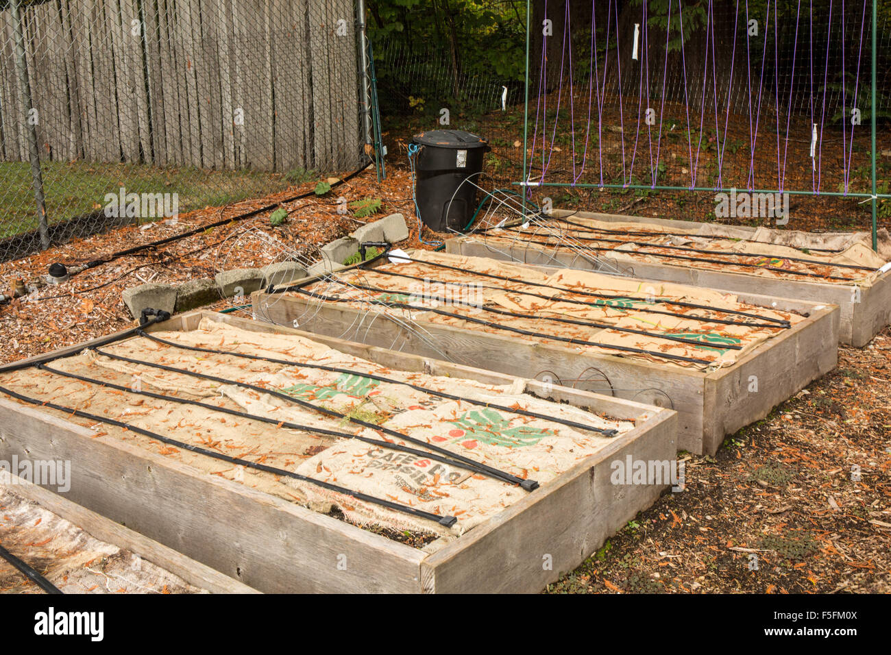 Raised Garden Beds Prepared For The Winter By Putting Burlap Bags Over Soil  To Lessen The Leaching Of Nutrients By Winter Rains
