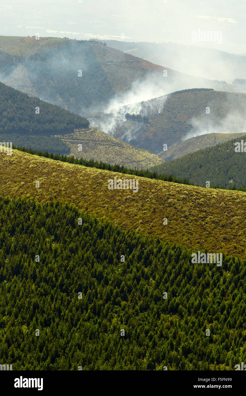 High Altitude Forest Deliberately Set To Fire - Stock Image