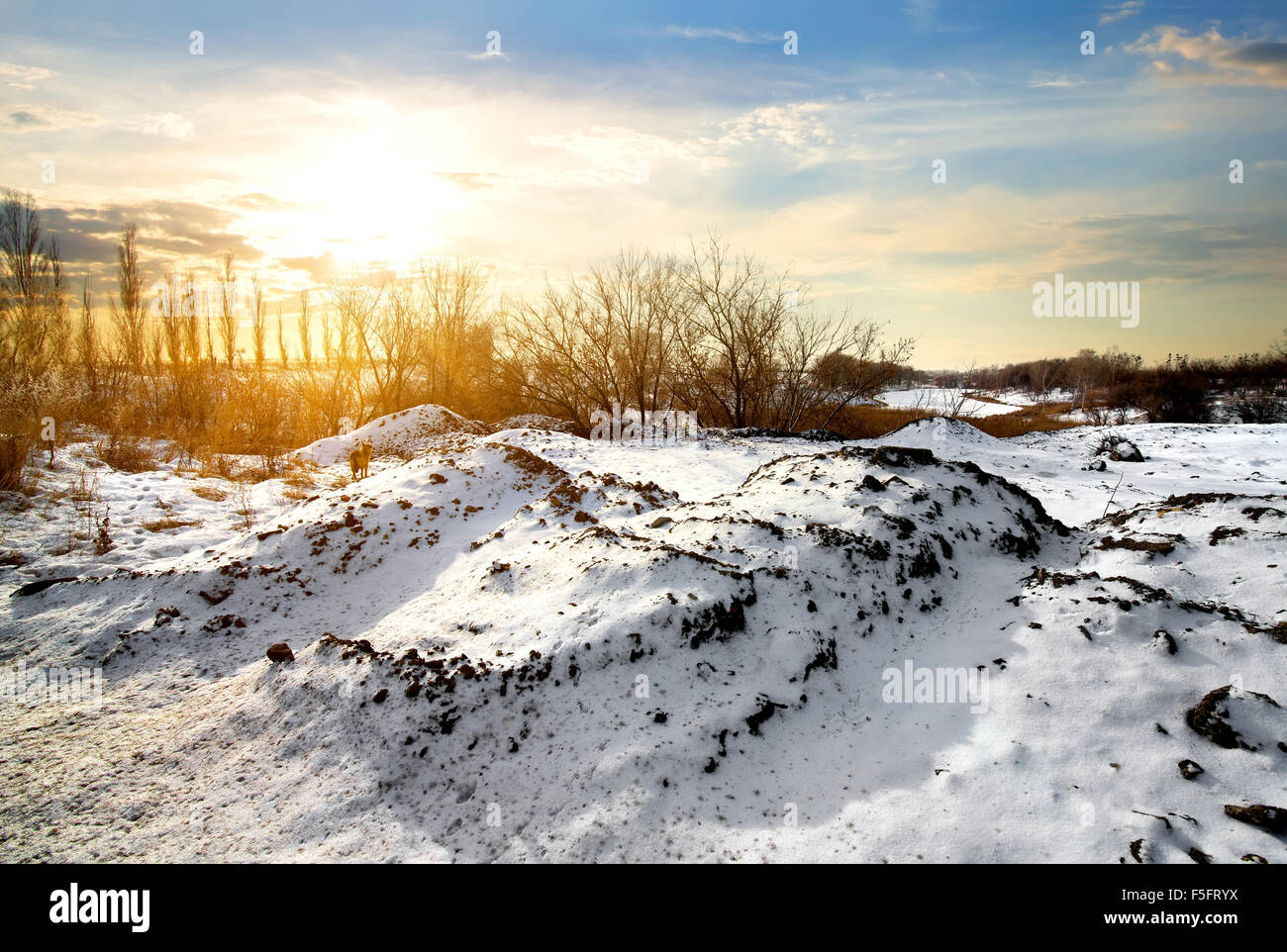 Countryside in winter at the bright sunrise - Stock Image