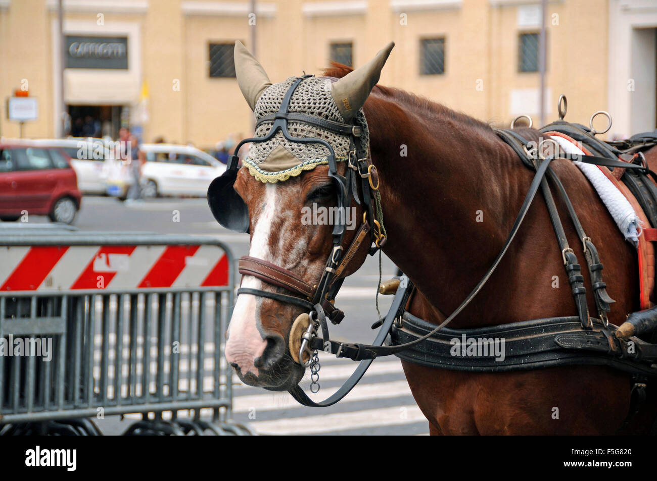 Brown Carriage Horse With Traditional Crochet Head Wear At The Stock Photo Alamy