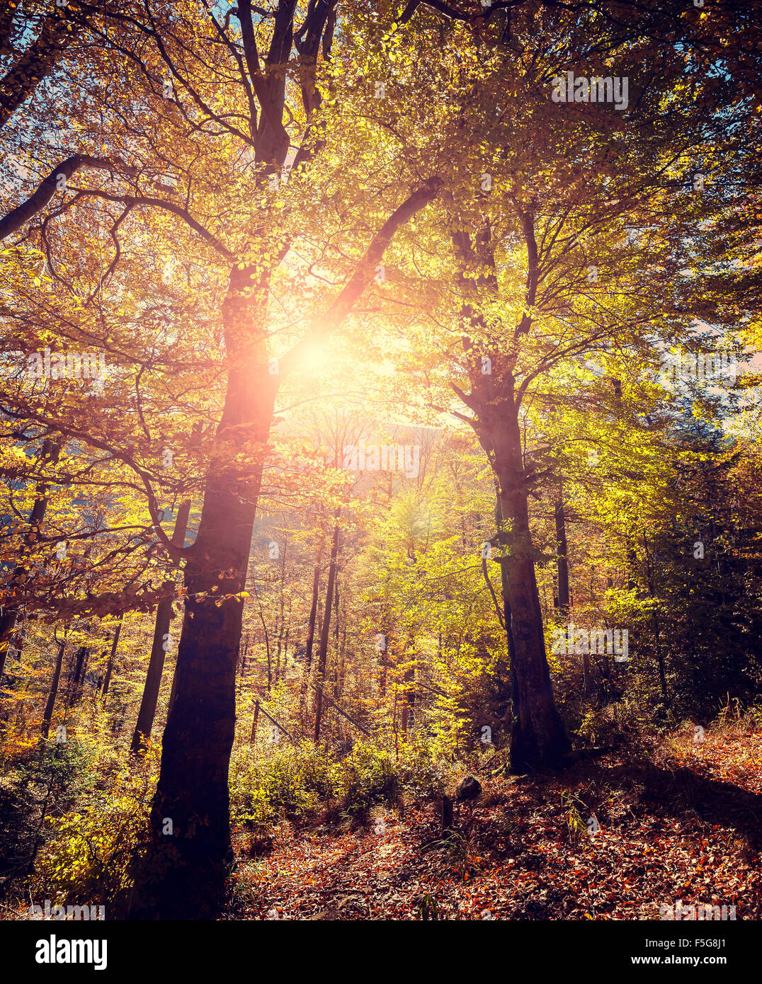 Retro stylized picture of autumnal forest. - Stock Image
