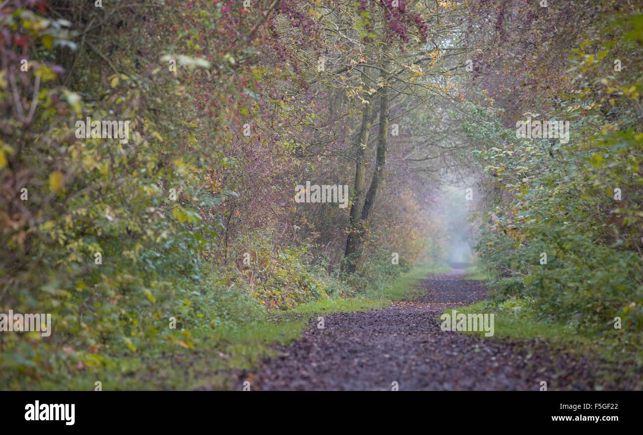 Wooded footpath disused railway line - Stock Image