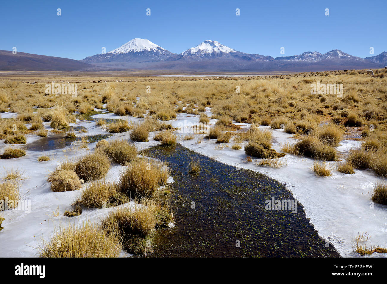Snow-covered volcanoes Pomerape and Parinacota, frozen water, Sajama National Park, border between Bolivia and Chile - Stock Image