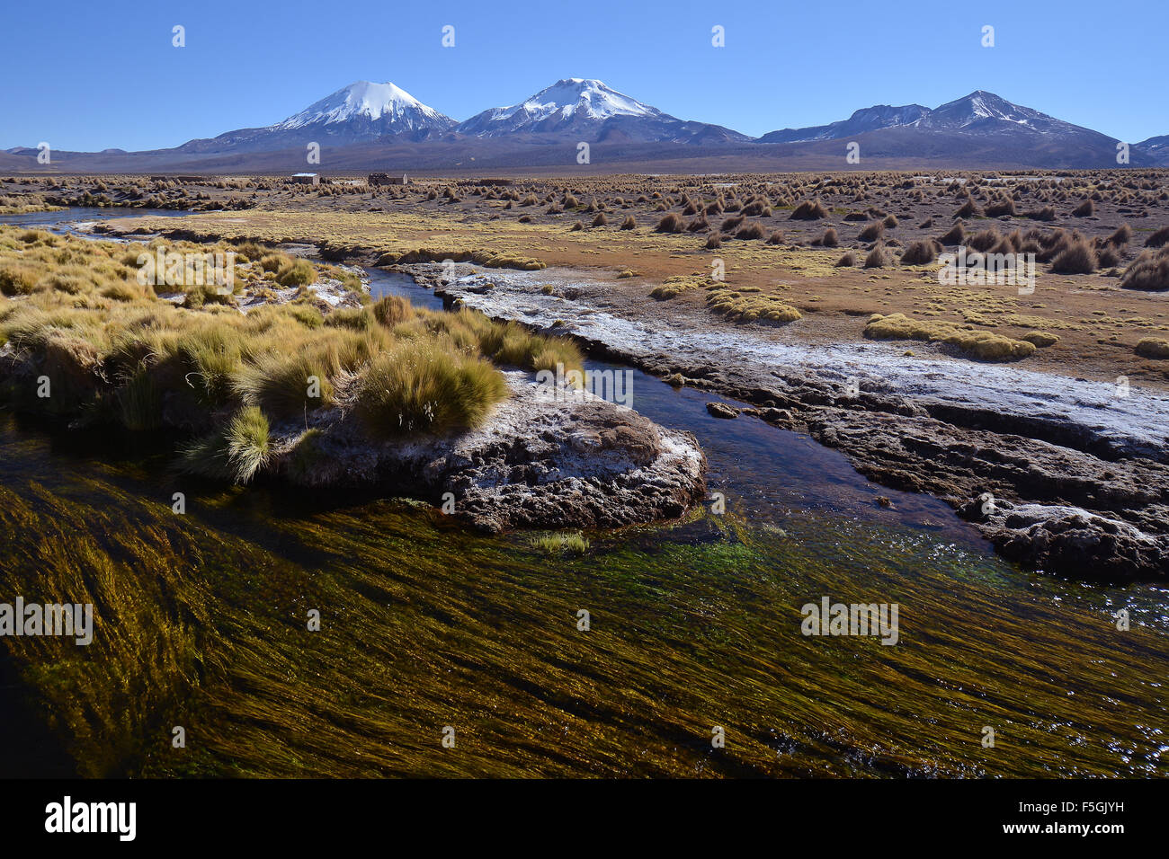 Snowcapped volcanoes Pomerape and Parinacota, Sajama National Park, border between Bolivia and Chile - Stock Image