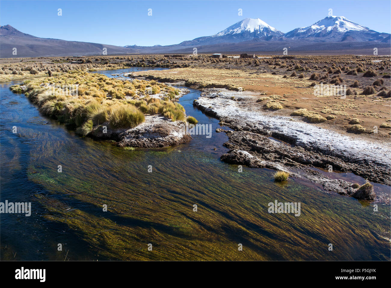 River and aquatic plants in front of snowcapped volcanoes Pomerape and Parinacota, Sajama National Park - Stock Image