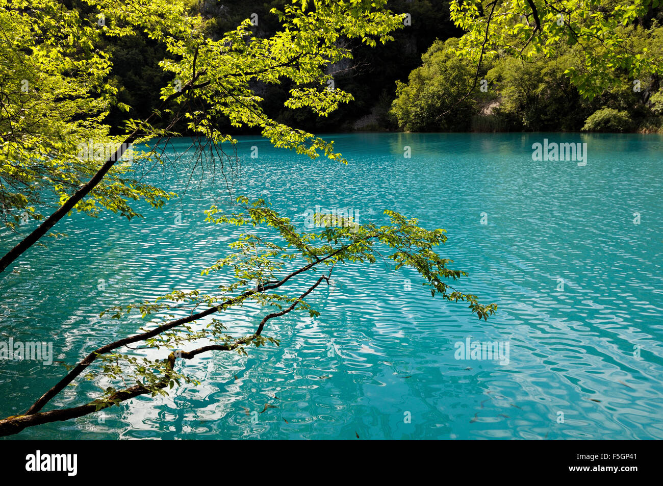 Green leaves above turquoise water in Plitvice Lakes National Park, Lower lakes group, Croatia - Stock Image