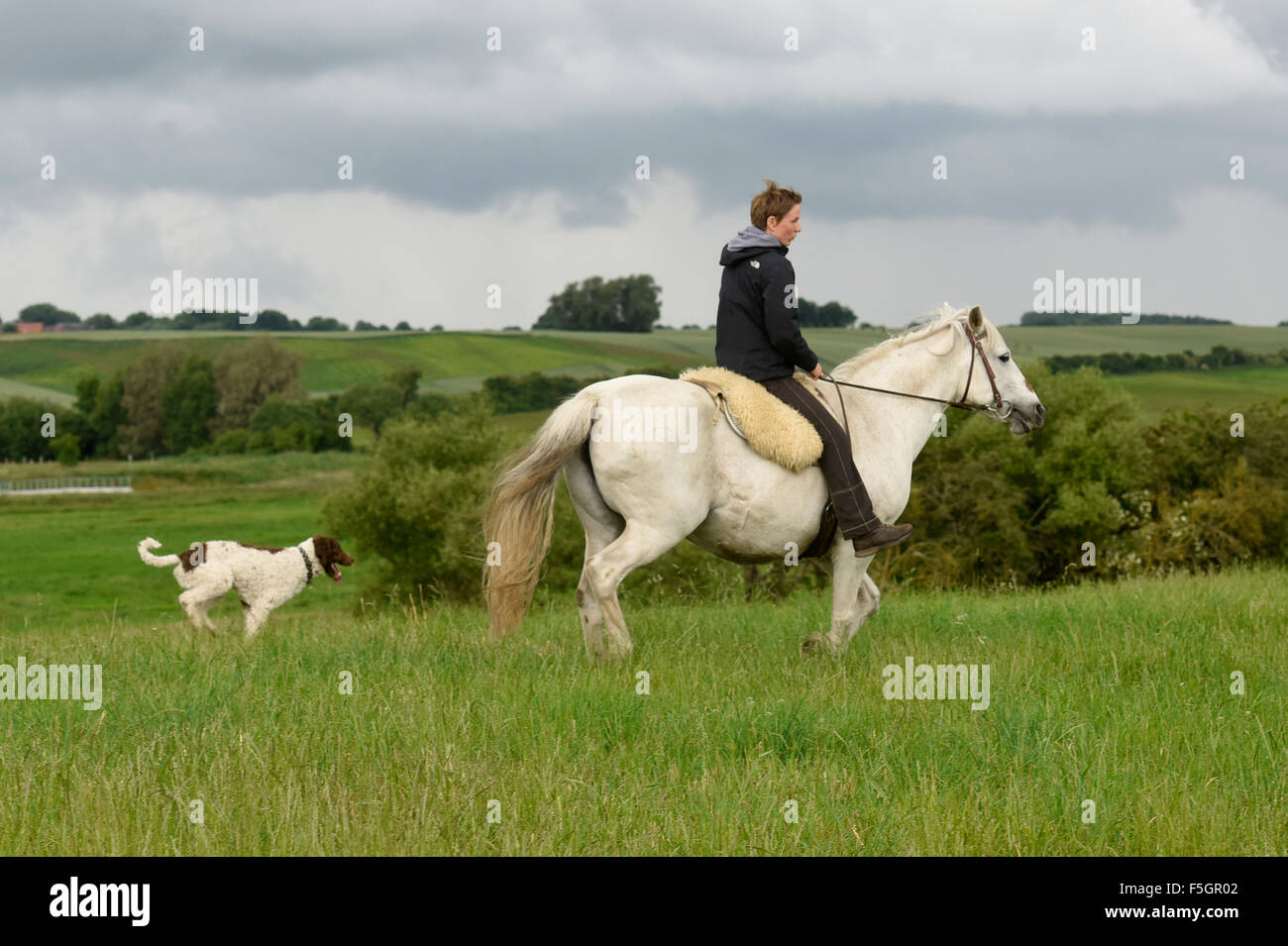 Wietzow, Germany, a woman makes a ride accompanied by her dog - Stock Image