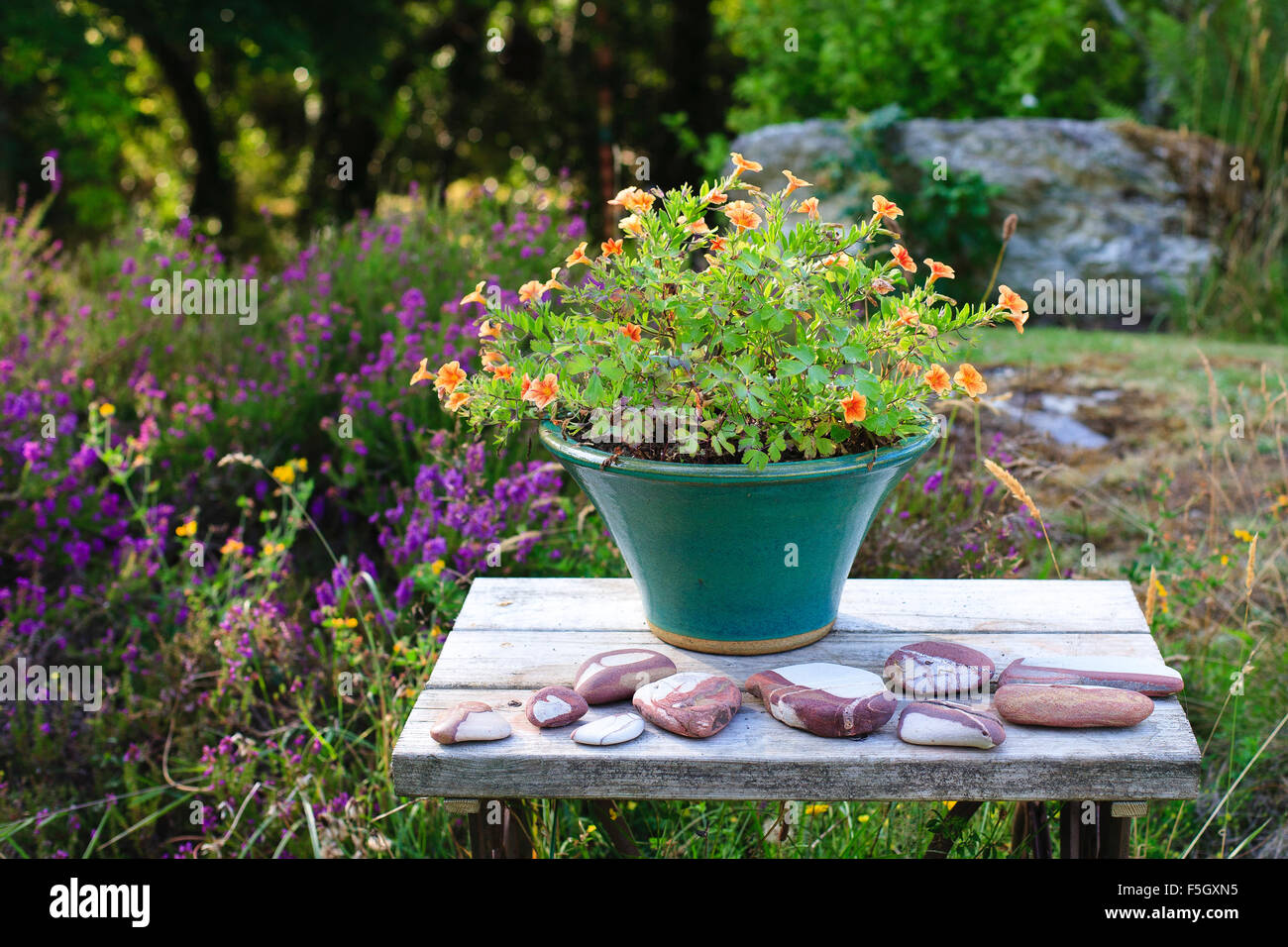 Flowers in plant pot on wooden table outdoors, with pebbles - Stock Image